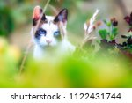 stray siamese cat or kitty... | Shutterstock . vector #1122431744