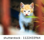 yellow cat looking at the... | Shutterstock . vector #1122433964