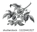 raspberry branch hand drawing... | Shutterstock .eps vector #1122441527