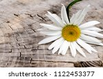 chamomile on a wooden... | Shutterstock . vector #1122453377