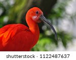 The Scarlet Ibis Is One Of The...