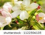 spring apple tree blossom close ... | Shutterstock . vector #1122506135