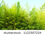 thick bamboo forest | Shutterstock . vector #1122507224