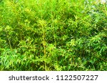 thick bamboo forest | Shutterstock . vector #1122507227