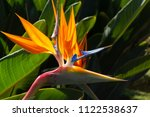 Colorful Flower Bird Of...