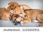 Stock photo sleeping puppies on the street 1122632921