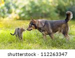 Stock photo dog and cat sniffing each other 112263347