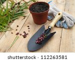 Reproduction of lilies stem chives. Shovel, gloves and pot on a wooden table - stock photo