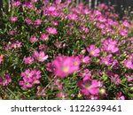 close up spring purple flowers... | Shutterstock . vector #1122639461