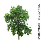 isolated tree on white... | Shutterstock . vector #1122644237