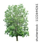 isolated tree on white... | Shutterstock . vector #1122644261