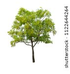 isolated tree on white... | Shutterstock . vector #1122644264