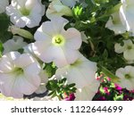 close up spring white flowers... | Shutterstock . vector #1122644699