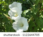 close up spring white flowers... | Shutterstock . vector #1122644705