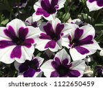 close up of colorful spring... | Shutterstock . vector #1122650459