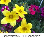 close up of colorful spring... | Shutterstock . vector #1122650495