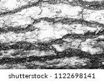 monochrome bark of pine tree... | Shutterstock . vector #1122698141