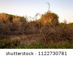 group of dead weeds on dry... | Shutterstock . vector #1122730781