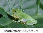 treefrog | Shutterstock . vector #112275371