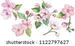 pink cherry blossoms. floral... | Shutterstock . vector #1122797627