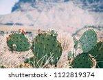 Cactus plant in the desrt