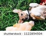 cute puppy mongrels playing... | Shutterstock . vector #1122854504