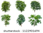 the collection of trees... | Shutterstock . vector #1122901694
