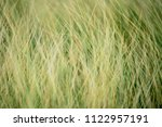 grassland background   texture  ...