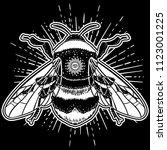 bumblebee hand drawn vector... | Shutterstock .eps vector #1123001225