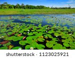 african landscape  water lily...   Shutterstock . vector #1123025921