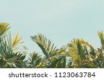 copy space tropical palm tree... | Shutterstock . vector #1123063784