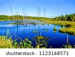 Swamp Marshland Water Landscap...