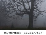 trees on a meadow in the fog on ... | Shutterstock . vector #1123177637