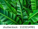 Tropical Banana Leaf   Green...