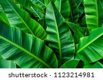 tropical banana leaf   green... | Shutterstock . vector #1123214981