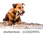 dog and sand separate... | Shutterstock . vector #1123224551