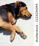 the imaginary dog   lying on... | Shutterstock . vector #1123234394