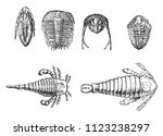 cambrian and silurian... | Shutterstock .eps vector #1123238297