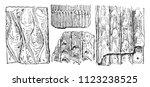 lepidodendron crenatum bark ... | Shutterstock .eps vector #1123238525