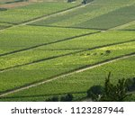 green wine field | Shutterstock . vector #1123287944