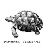 large land turtle with...   Shutterstock .eps vector #1123317761