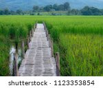 the wooden walkway on the green ... | Shutterstock . vector #1123353854