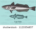 cape hake. vector illustration... | Shutterstock .eps vector #1123356857