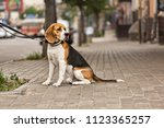 dog is waiting for the owner  a ... | Shutterstock . vector #1123365257