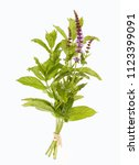 peppermint with blossom | Shutterstock . vector #1123399091