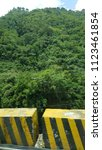 tropical forest tree's and... | Shutterstock . vector #1123461854