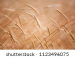wheat spikes in the warm summer ... | Shutterstock . vector #1123496075