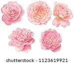five pink roses in full bloom... | Shutterstock . vector #1123619921