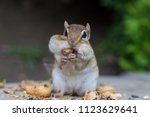 Chipmunk Having Nuts