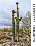 the sonora desert and san tan... | Shutterstock . vector #1123632551
